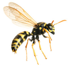 Wasp control in Stratford